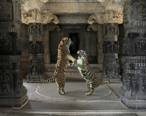 New-Temple-Fighting-Tigers-copy