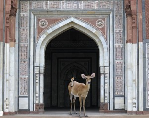 The-Messenger-Purana-Qila-Delhi