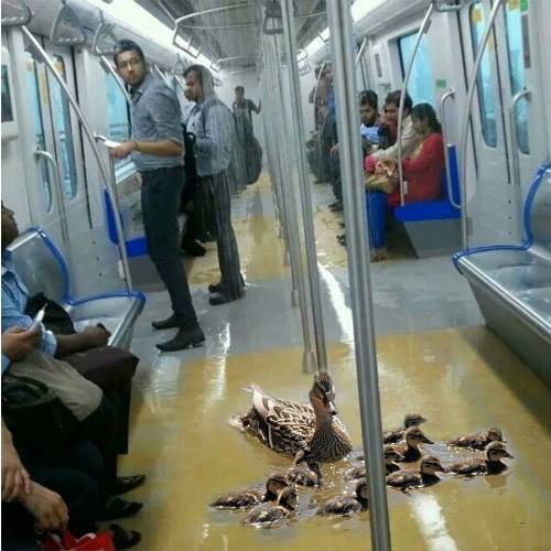 7 Reasons Why We Totally Love The Delhi Metro  Indiatimesm. Bed And Breakfast Signs Of Stroke. Bjp Banners. Gsxr Decals. Rich Media Banners. Kappa Kappa Gamma Signs Of Stroke. Custom Stickers Cheap Bulk. Roll Banners. Crossed Signs Of Stroke