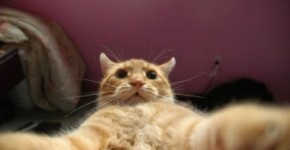 If You Thought You Are The Only Ones Crazy About Selfies, Wait Till You Watch These Adorable Animals