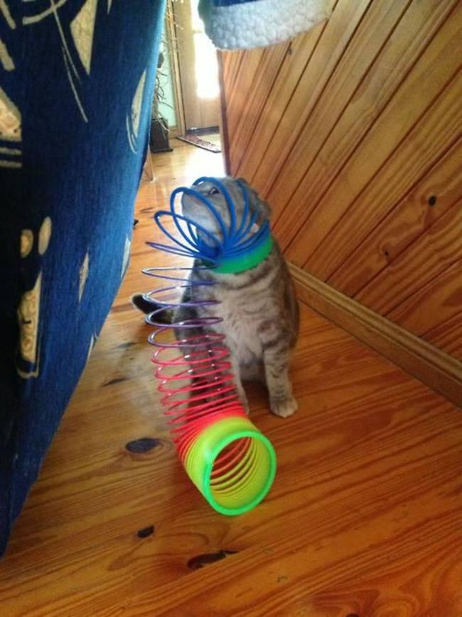 21 Animals That Know Pretty Well How To Get Stuck Pretty Bad. LOL