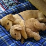 14 Cutest Cuddly Animals That Will Make You Feel Warm Even In This Bitch Cold Winter