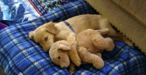 14 Cutest Cuddly Animals That Will Make You Really Warm In This Bitch Cold Winter