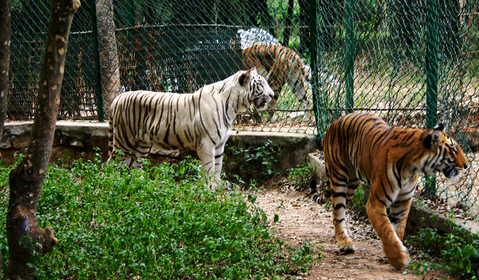 Bannerghatta-National-Park-Prateek-Rungta-Flickr-Creative-commons_new