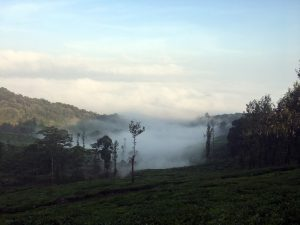 Wayanad Tourist Attractions