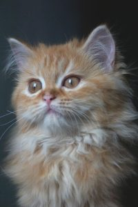 curious and beautiful cat pictures