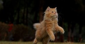beautiful cat pictures