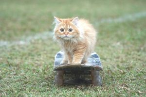 cute and beautiful cat pictures